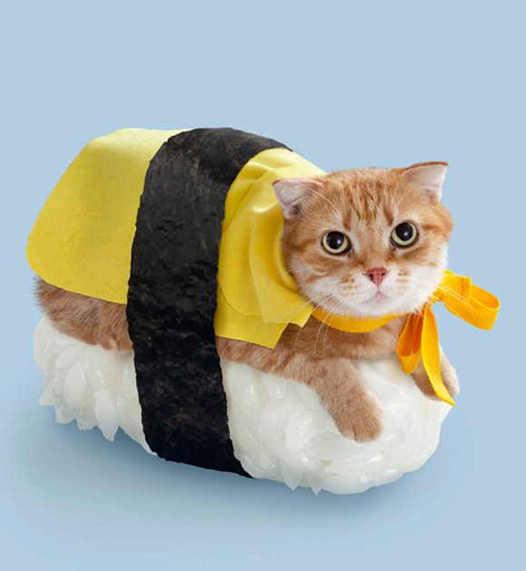 neko sushi 05